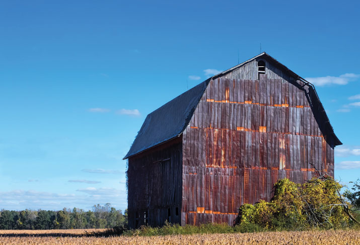 Barn in soy field